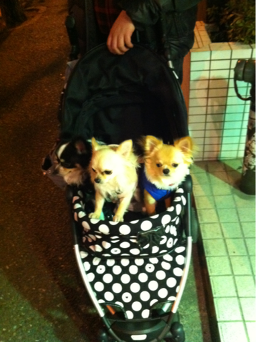 iphone/image-20120220024230.png